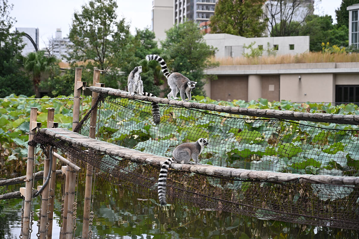 Nikon Z7の作例 上野動物園の猿
